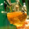 遠野醸造✕うめひかり「完熟梅セゾン」