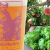 """サンクトガーレン、桃のフルーツビールと、ブルワリー史上最大量ホップ投入の""""NE-IPA"""""""
