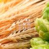山梨県北杜市のホップと苗の栽培・販売 ホップ農家小林